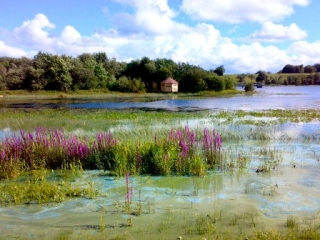 Killyfole Lough Bird Hide